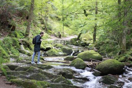 Wanderroute - Bad Herrenalb